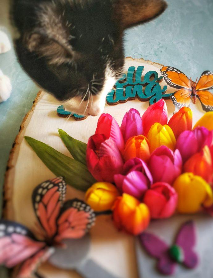 """""""Hello Spring"""" Sign"""